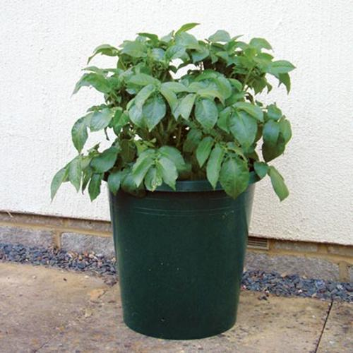 Giant Growing Buckets