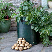 Potted Potatoes and Bag Collection
