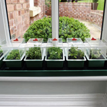 Perfectly sized for the windowsill, and ideal for raising a number of different varieties, the 'Super 7 contains 7 mini propagators, each with a vente