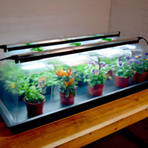 Geopod Heated Propagator - Large