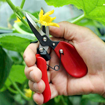 With its broad upper handle, these floral shears sit snuggly in the palm of your hand to provide easy and precise control over delicate, repetitive cu