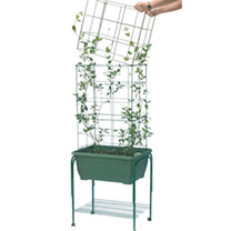 Mini Garden Growing Success Kit - Trolley