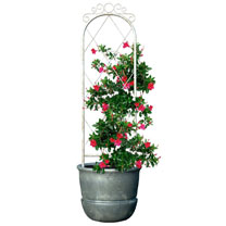 French Country Scroll Pot Trellis