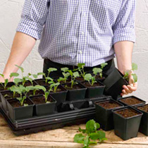 Vegetable Growing Sets