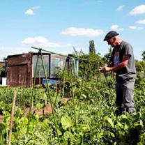 Easy Vegetable Grow Frame - 1.2m x 2.4m