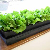 Windowgrow Self-watering System