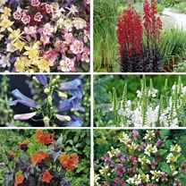 Perennial Shade Loving Collection (96)