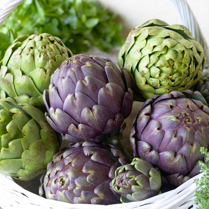 Artichoke Plants - Twin Pack