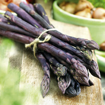 An excellent addition to any asparagus planting, Pacific Purple produces a bountiful harvest of very mild, sweet-tasting spears that are a delight to