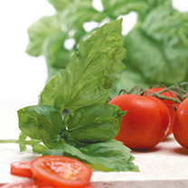 Herb Seeds - Basil Neapolitan