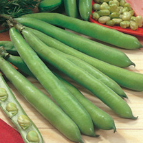 Aquadulce Claudia Broad Bean Seeds 193818