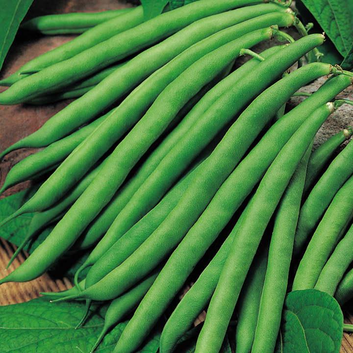 Bean (French Dwarf) Plants - Safari