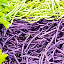 Bean (Dwarf French) Seeds - Sprite & Purple Queen