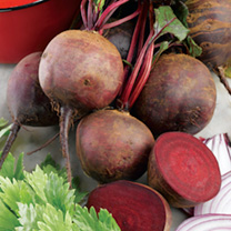Smooth-skinned roots of fine colour, Beetroot Boltardy are ideal for exhibition. Resistant to bolting and recommended for early sowing. (Globe or Roun