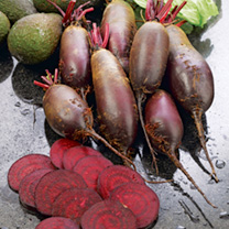 Cylindra produces delicious, high quality, dark crimson, cylindrical roots which have a long storage period. Late ripening, slow to bolt, and shows go