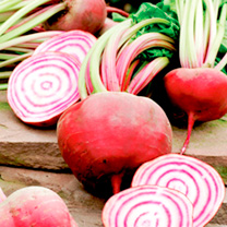 Beetroot Seeds - Chioggia & Cylindra