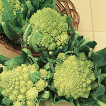 Cauliflower Seeds - Romanesco Early