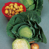 An easy to grow cabbage that produces medium-sized, firm round heads maturing in summer and early autumn. Make several sowings for continuous crops. D
