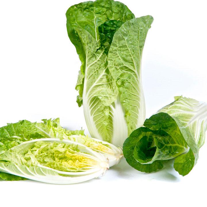Cabbage (Chinese) Plants - F1 Natsuki