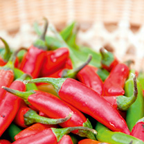 Pepper Chilli Plants - F1 Serenade