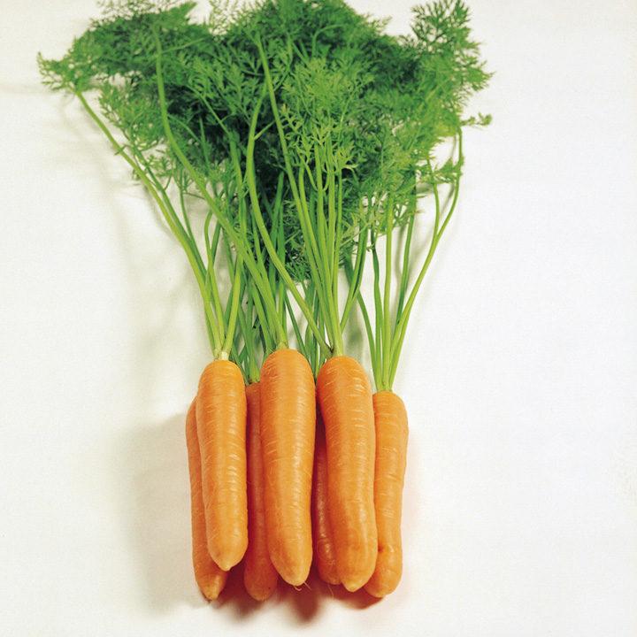 Carrot F1 Eskimo Seeds