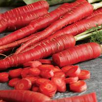 Carrot Seeds - Samurai