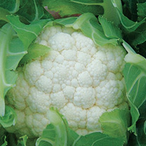 vegetable seeds to sow in September