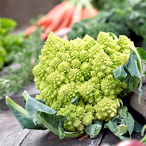 Cauliflower Plants - Colloseo