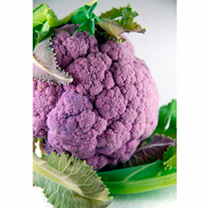 Cauliflower Seeds - All The Year Round & Di Scilia Violetta