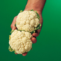 A versatile early cauliflower. Grow it at close spacing for a quick crop of delicious mini heads or at wider spacing for more conventionally sized cur