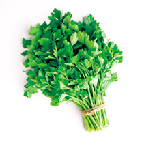 Biennial herb with a slightly bitter taste but perfect for flavouring chicken and fish dishes. Supplied in a 9cm pot.