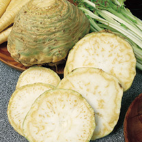 This leading quality celeriac produces large, firm roots with white flesh that remains white after blanching. Ideal for stews or soups, but also inval