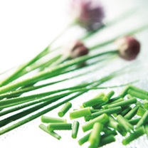 Perennial clumps of onion-flavoured, tender, spear-like green leaves. Delicious in all egg, potato and cheese dishes, in salads, and sprinkled over so
