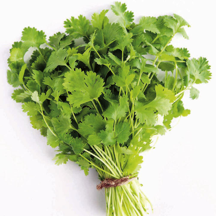 Herb Plant - Coriander, Common