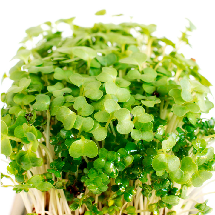 Cress Seeds - Purple & Green
