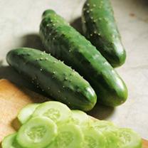 Cucumber Seeds - F1 Prima Top
