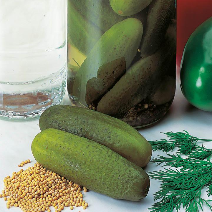 Cucumber Seeds - Venlo Pickling (Gherkin)