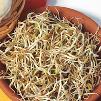 Fenugreek Shoots Seeds