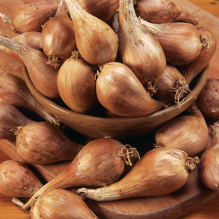 Shallot Griselle