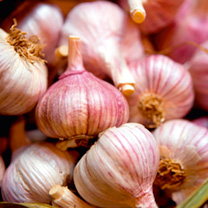 garlic bulbs edenrose 244400