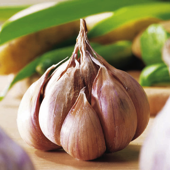 Garlic Bulb Plant Garlic Bulbs Germidour