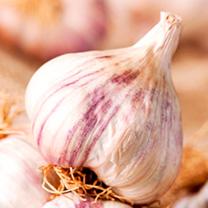 Garlic Bulbs - Autumn Planting Collection