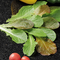 Speedy Veg Seed - Baby Leaf Salad Collection