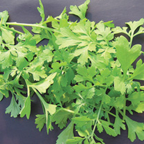 Speedy Veg Seed - Leaf Salad Cress Greek