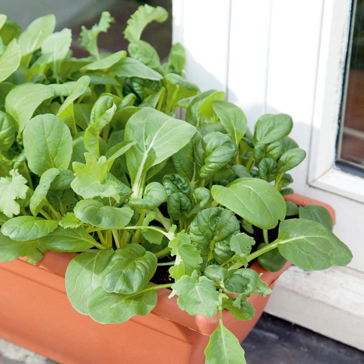 Leaf Salad Stir Fry Mix Speedy Veg