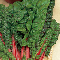 Chard Seeds - Yellow & Red