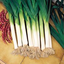 Leek Seeds - Atal