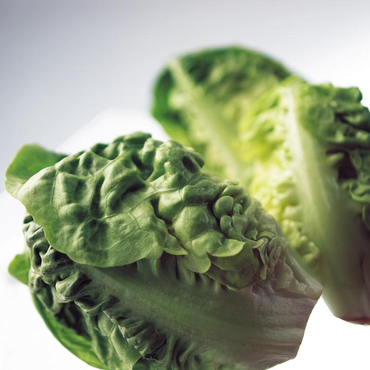 Lettuce Seed Tape - Little Gem Cos Lettuce