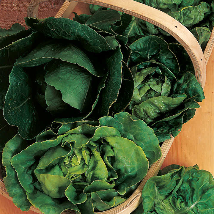 Lettuce Seeds - Mix