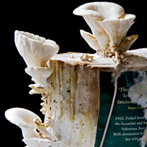 Oyster mushrooms are by far the easiest to grow of all the edible fungi. These exotic mushrooms, with their delicate coral-like frills, are as delicio
